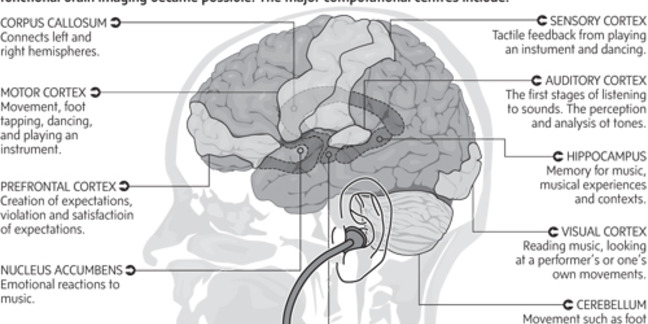 Cropped brain and music