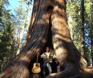 Thumb elephant fire in sequoias